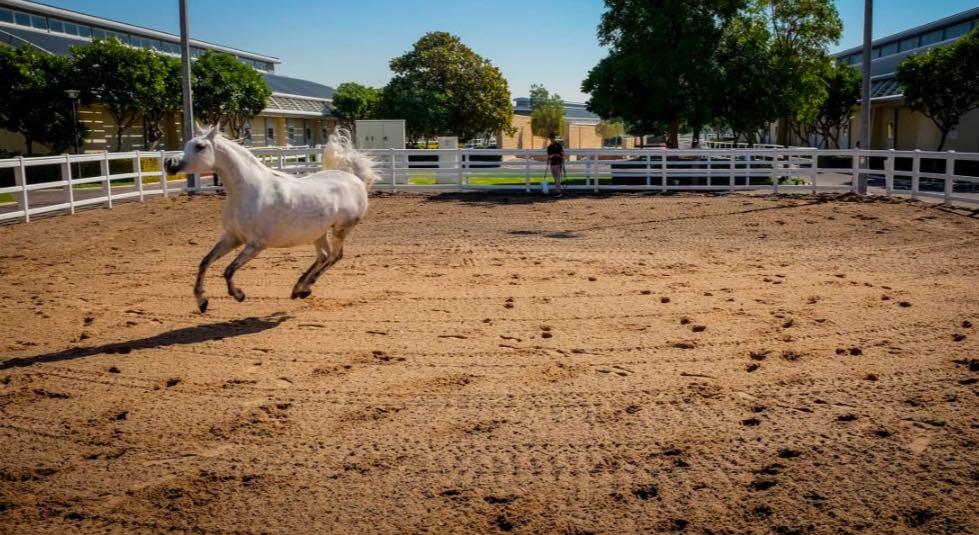 Al Shaqab- un mondo di cavalli - meteoweek.com