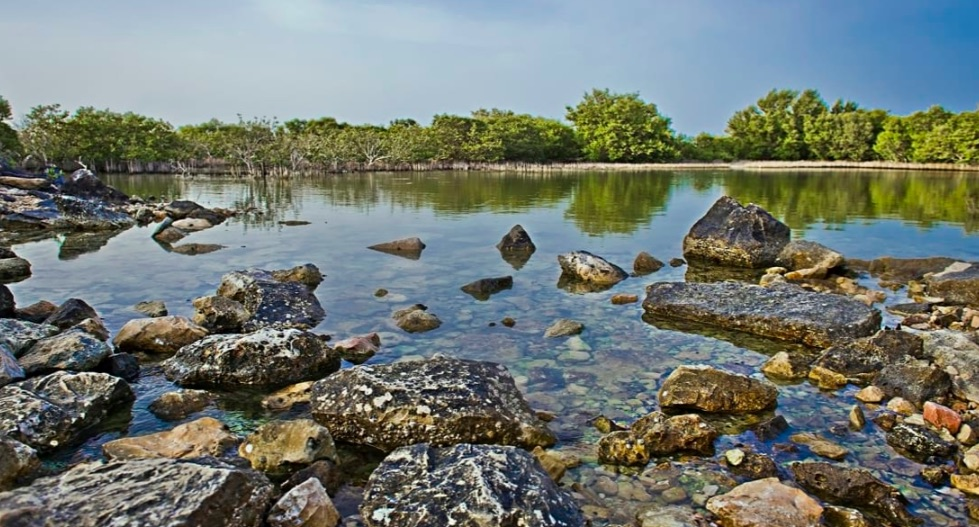 Mangrovie Al Thakira- vegetazione desertica - meteoweek.com