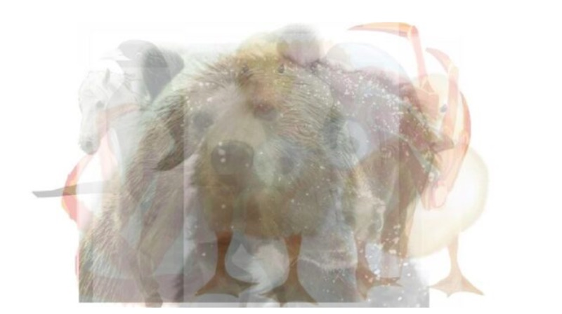 Test chiamato Sette Animali - meteoweek.com