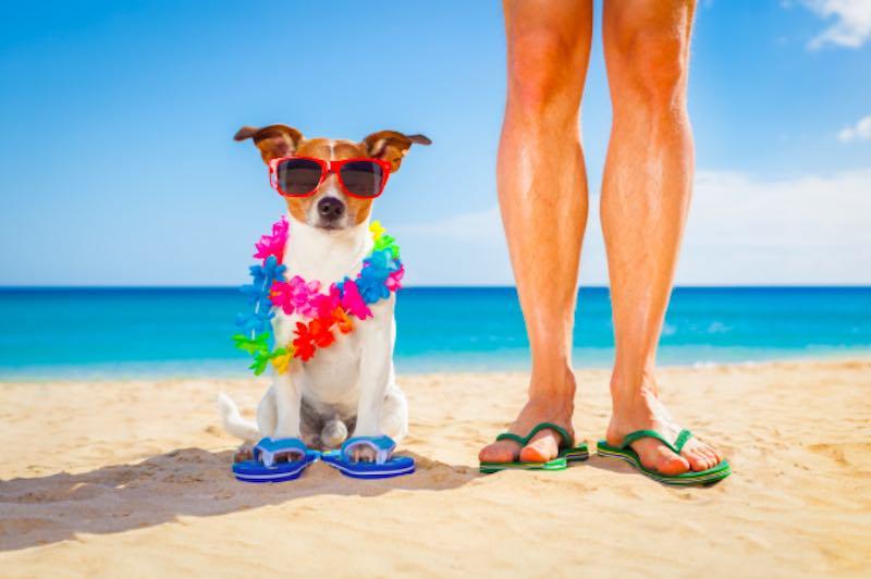 Vacanze con cane o gatto, mio fido compagno- 7 consigli utili - meteoweek.com