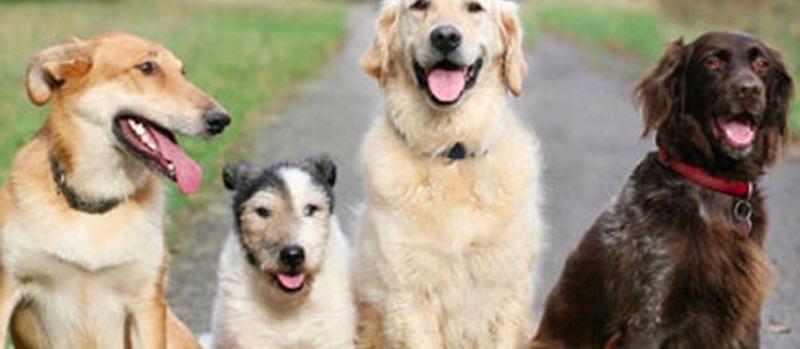 cani - Test chiamato Sette Animali - meteoweek.com