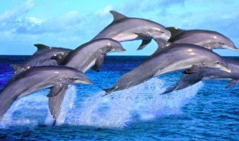 delfini - Test chiamato Sette Animali - meteoweek.com