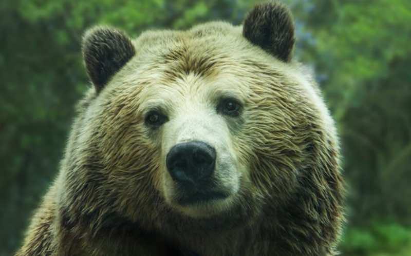 rso - Test chiamato Sette Animali - meteoweek.com