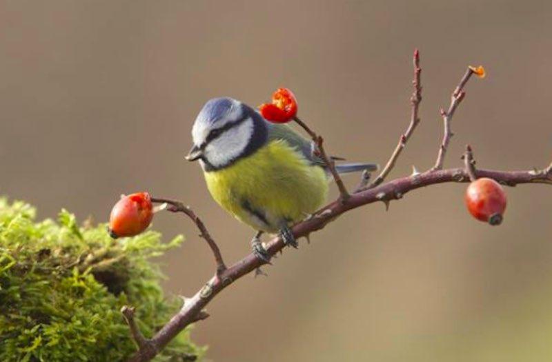 uccelli - Test chiamato Sette Animali - meteoweek.com