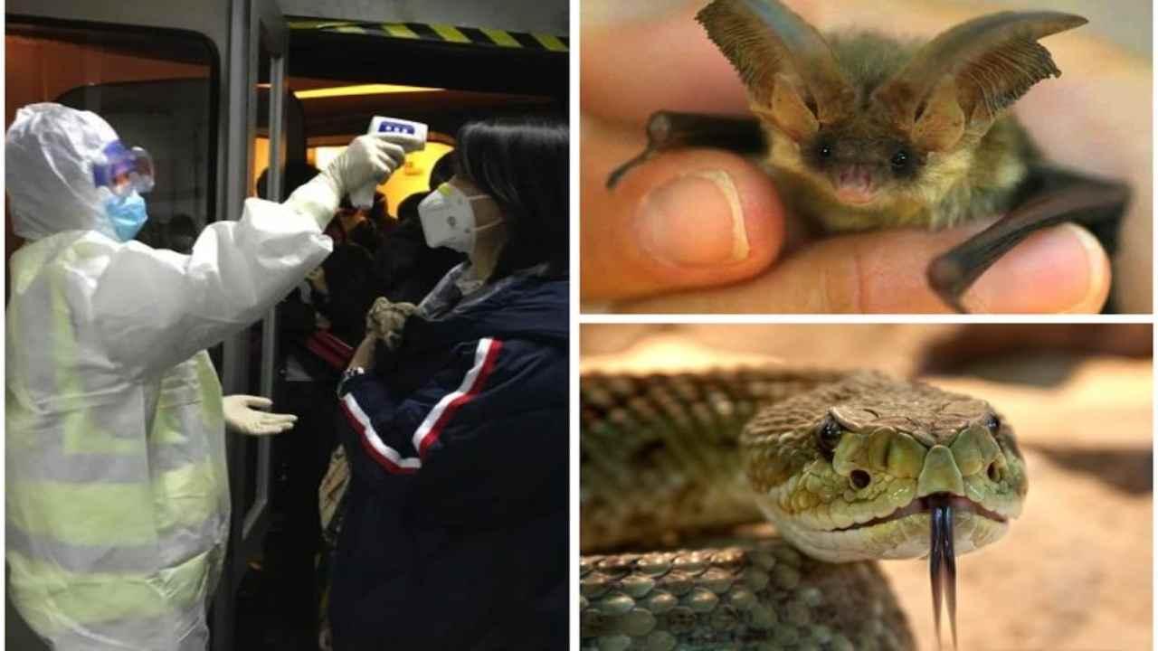 Il virus cinese 2019 nCoV arriva dai serpenti: nuova mappa g