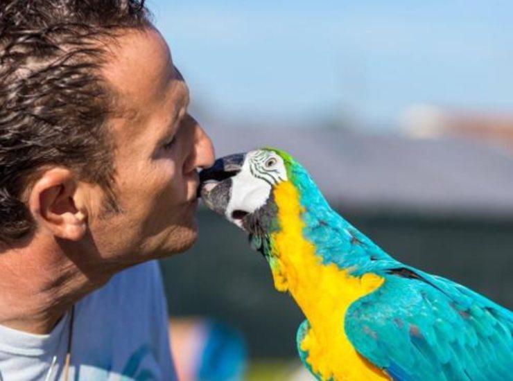 Denunciato l'uomo che ha lanciato pietre contro pappagallo di Enzo Salvi