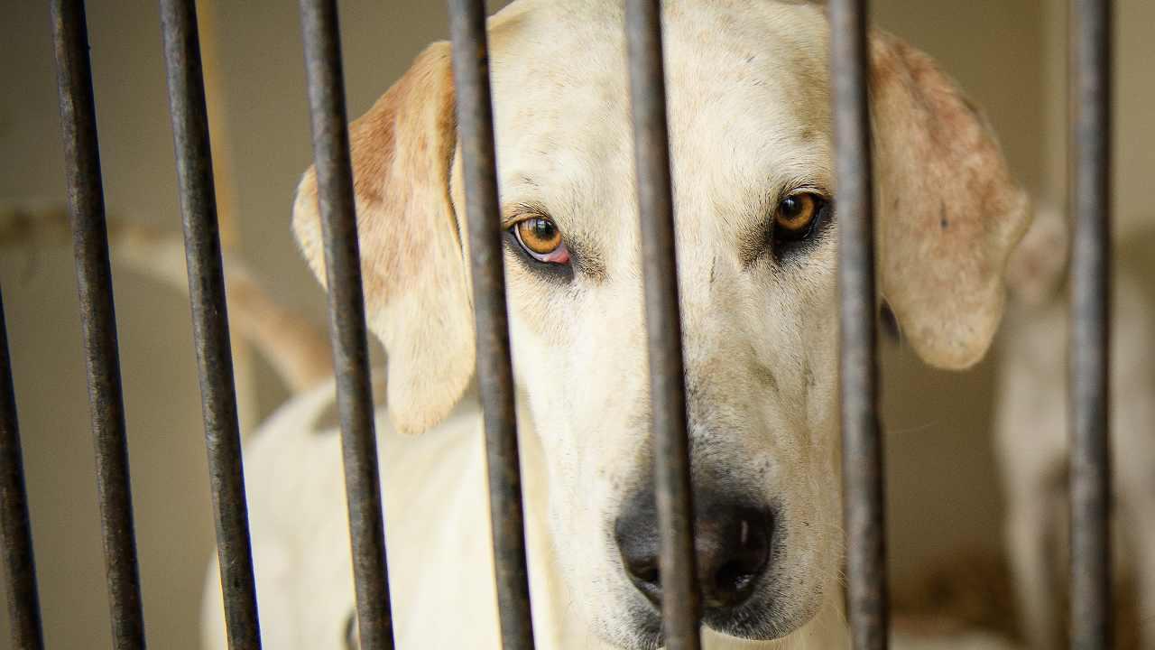 Scoperto canile lager: randagi maltrattati, malnutriti e a v
