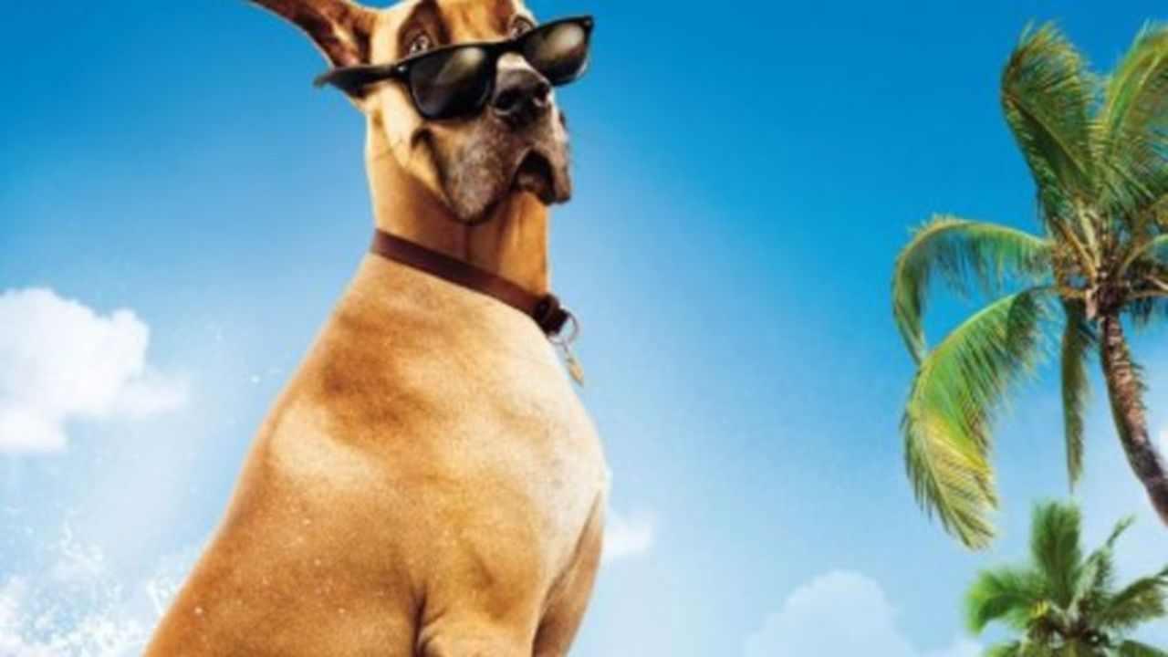 Stasera in tv | 2 giugno | Sansone, un simpatico cane porta
