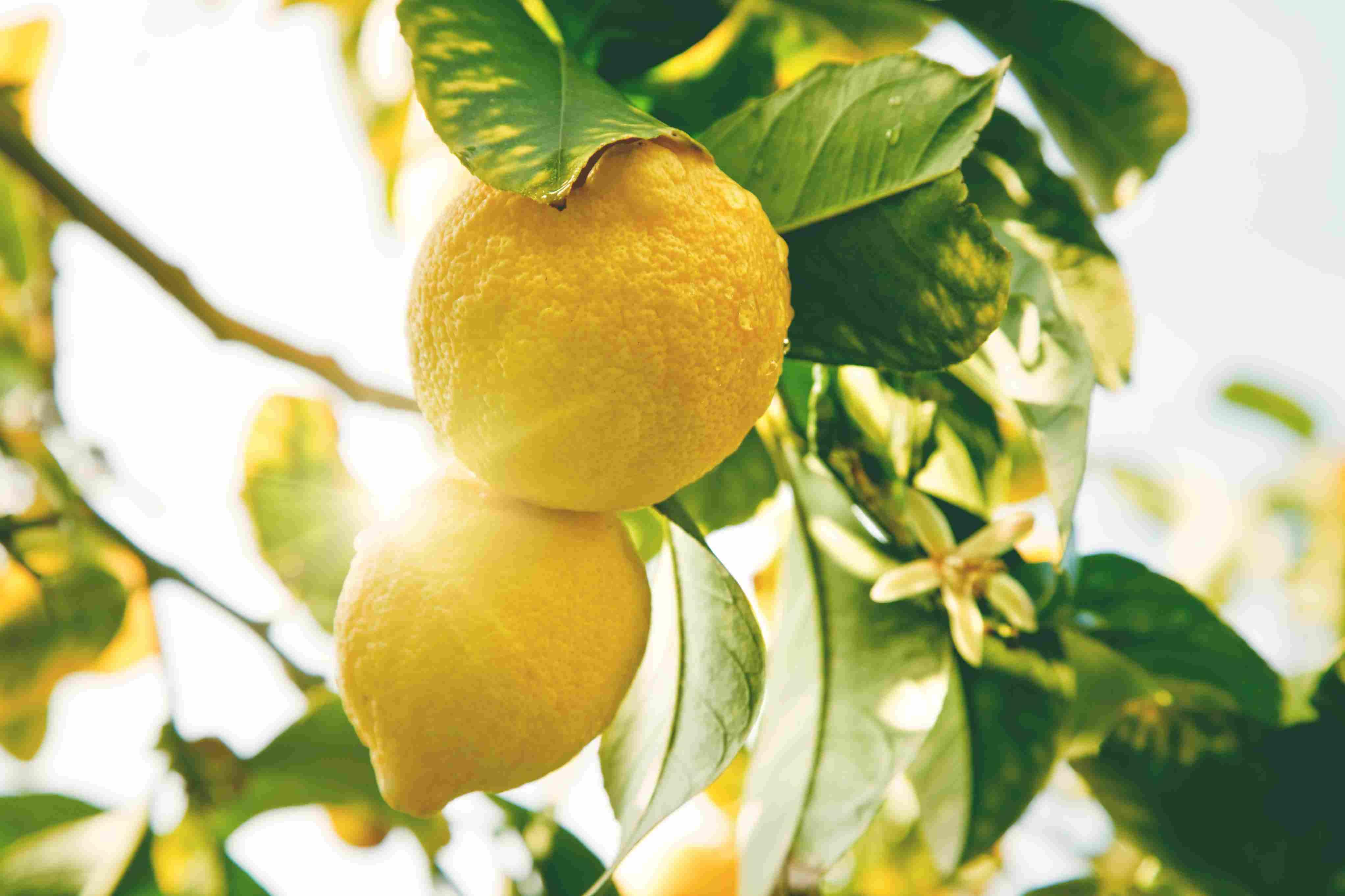 Limone-Meteoweek.com