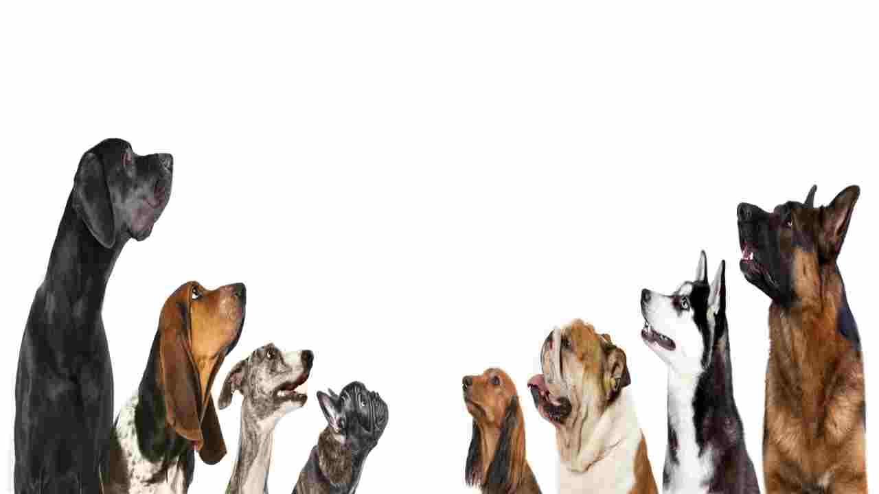 Cani , alcune le razze da evitare alla prima esperienza di adozione