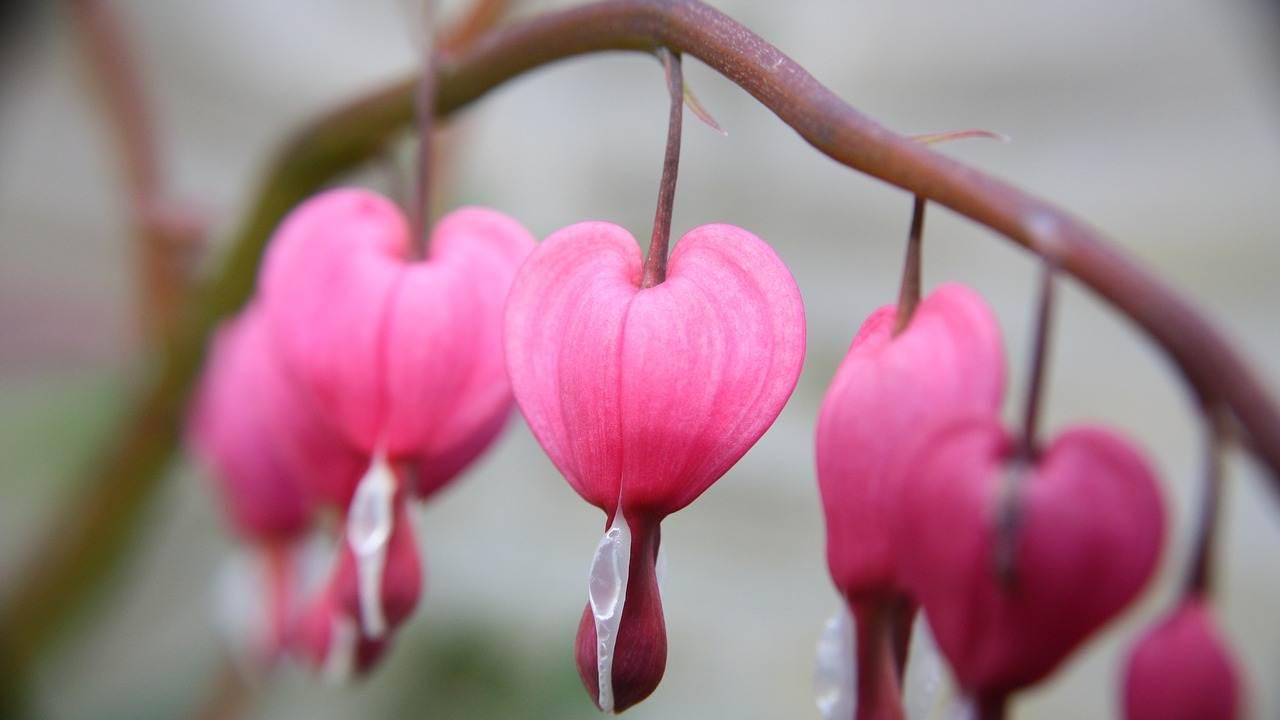 cuore amore Vangelo