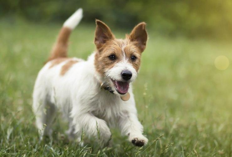attività fisica per il tuo cane-meteoweek.com