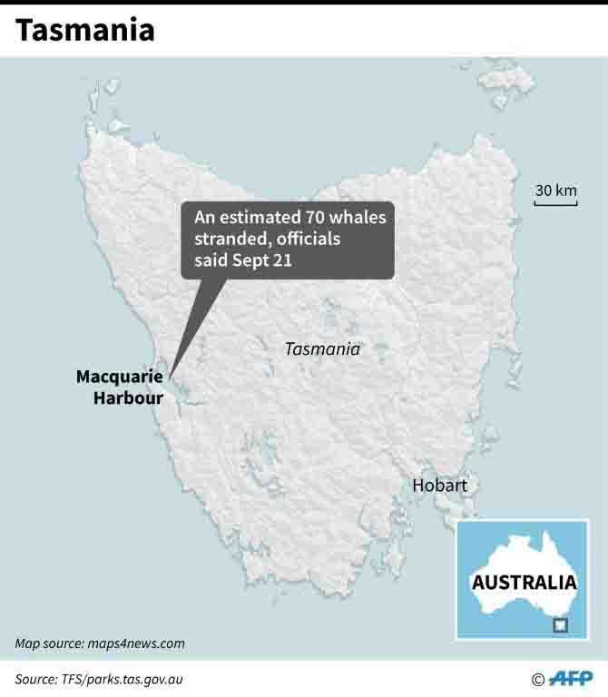 Tasmania 70 balene spiaggiate