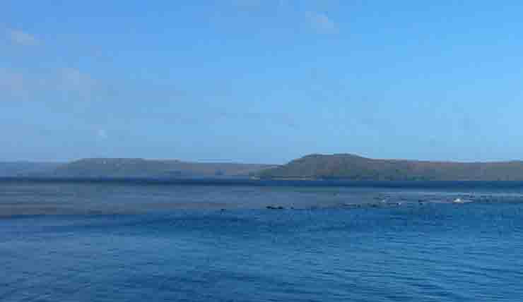 Balene spiaggiate Tasmania