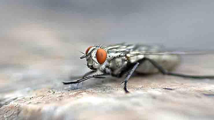 Tenta di uccidere una mosca ma fa esplodere casa