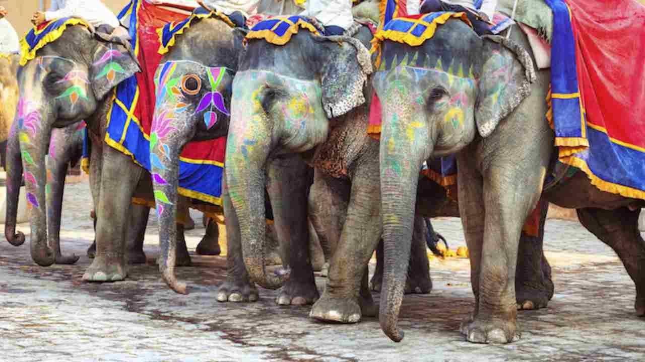 india-elefanti-rajasthan