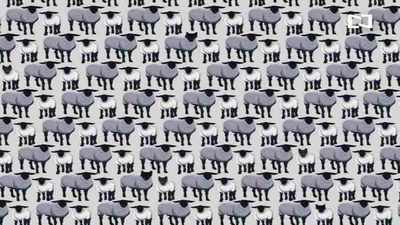 Test psicologico visivo | Quanti lupi vedi? Scopri cosa significa