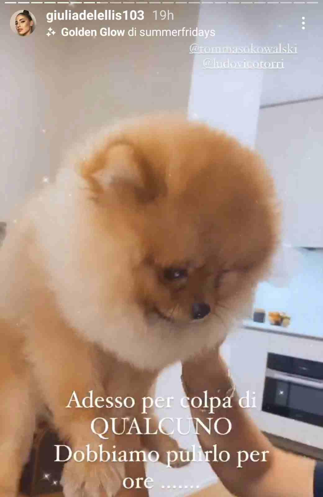 Il cucciolo di Giulia De Lellis - Fonte Instagram