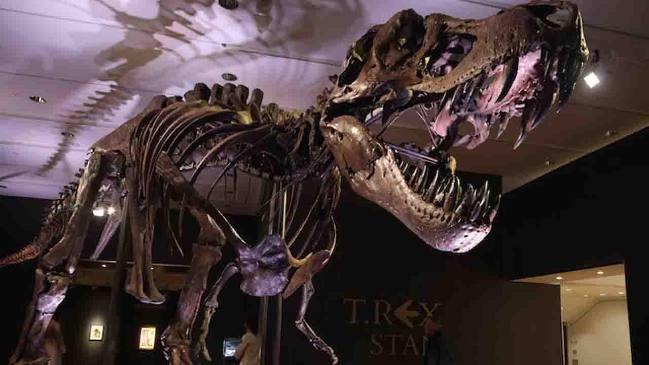 Stan, il tirannosauro venduto per 27 milioni di euro