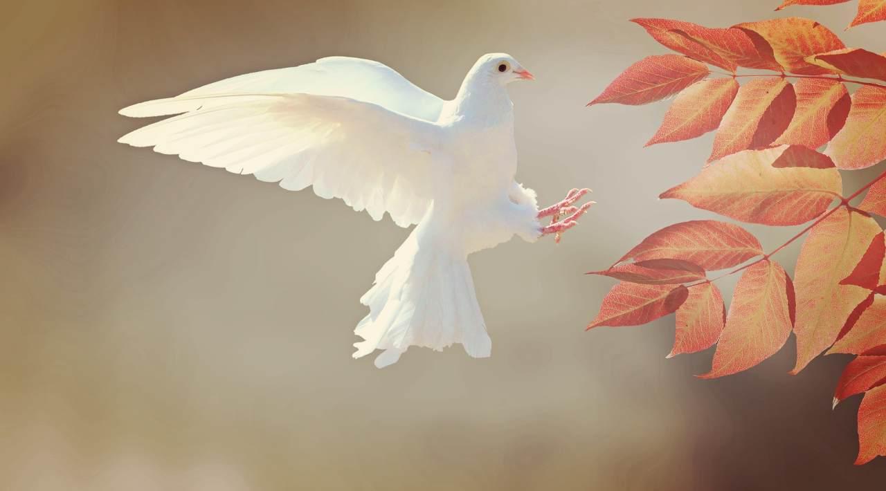 amore resta Spirito Santo