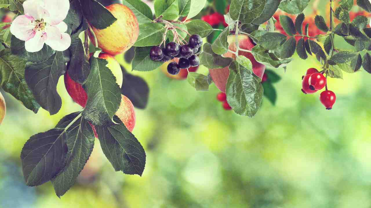 frutti parola antidoto morte