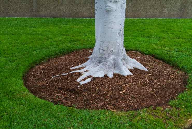 Pacciamatura: foglie secche -Meteoweek.com