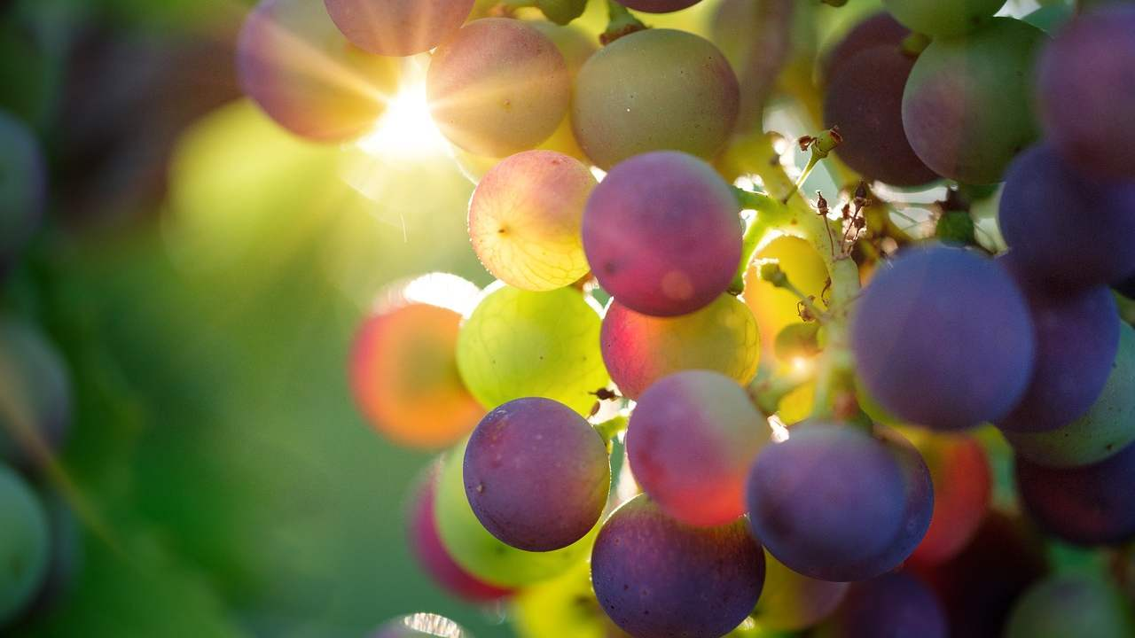Frutti di gioia vite vangelo