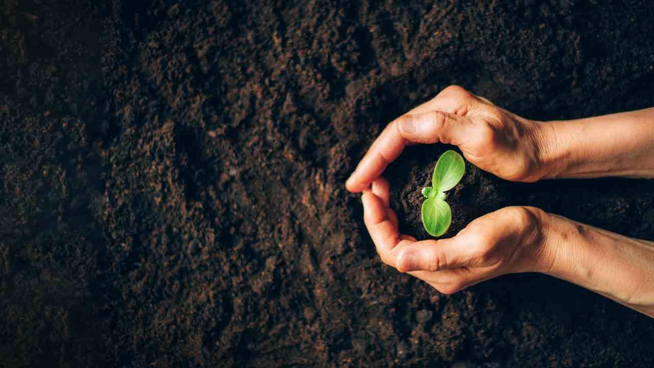 Seme pianta