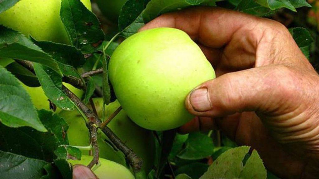 frutta coldiretti